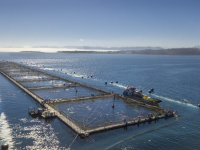 Hendrix Genetics launches new products for Chilean salmon